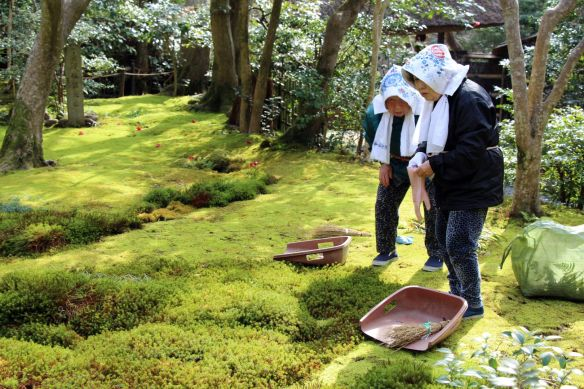Members of the sect swiping clean the moss