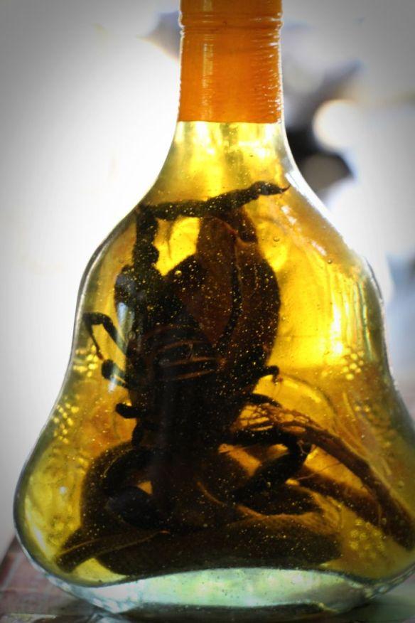 snake & scorpion